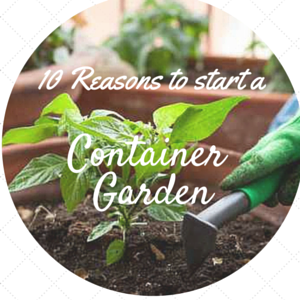 10 Reasons to Grow Your Own Food in a Container Garden